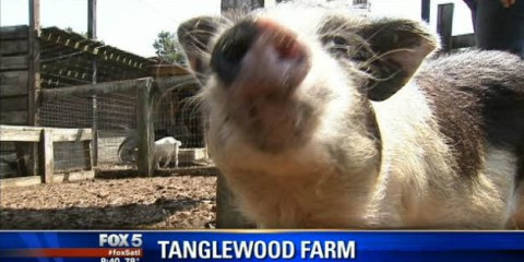 Tanglewood featured on FOX 5 ATLANTA