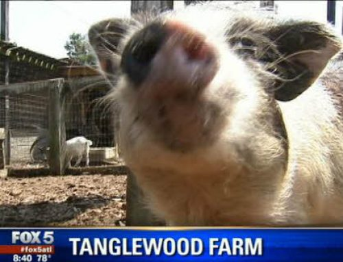 Tanglewood Featured on FOX 5 ATLANTA!