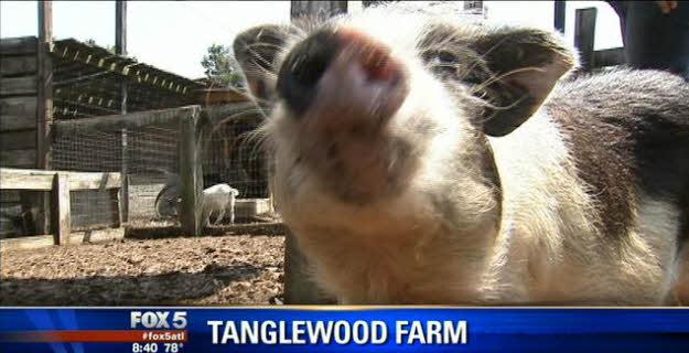 Tanglewood featured on FOX 5 ATLANTA