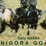 Miniature Nigora Goats