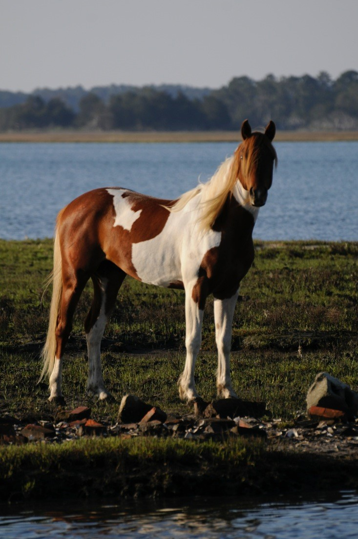 David Stanley Ford >> Chincoteague Ponies - Tanglewood Farm Miniatures