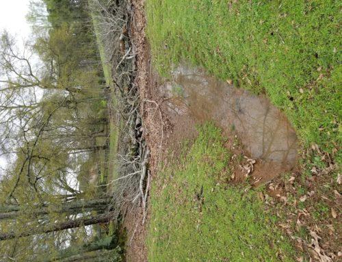 Tanglewood Farm Red Road – Dead Mud Flood Trees
